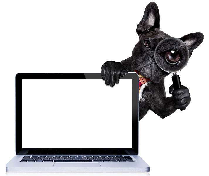 Northern Adelaide Pet Sitters - pet sitter image of black French Bulldog standing behind a laptop and peering through a magnifying glass.